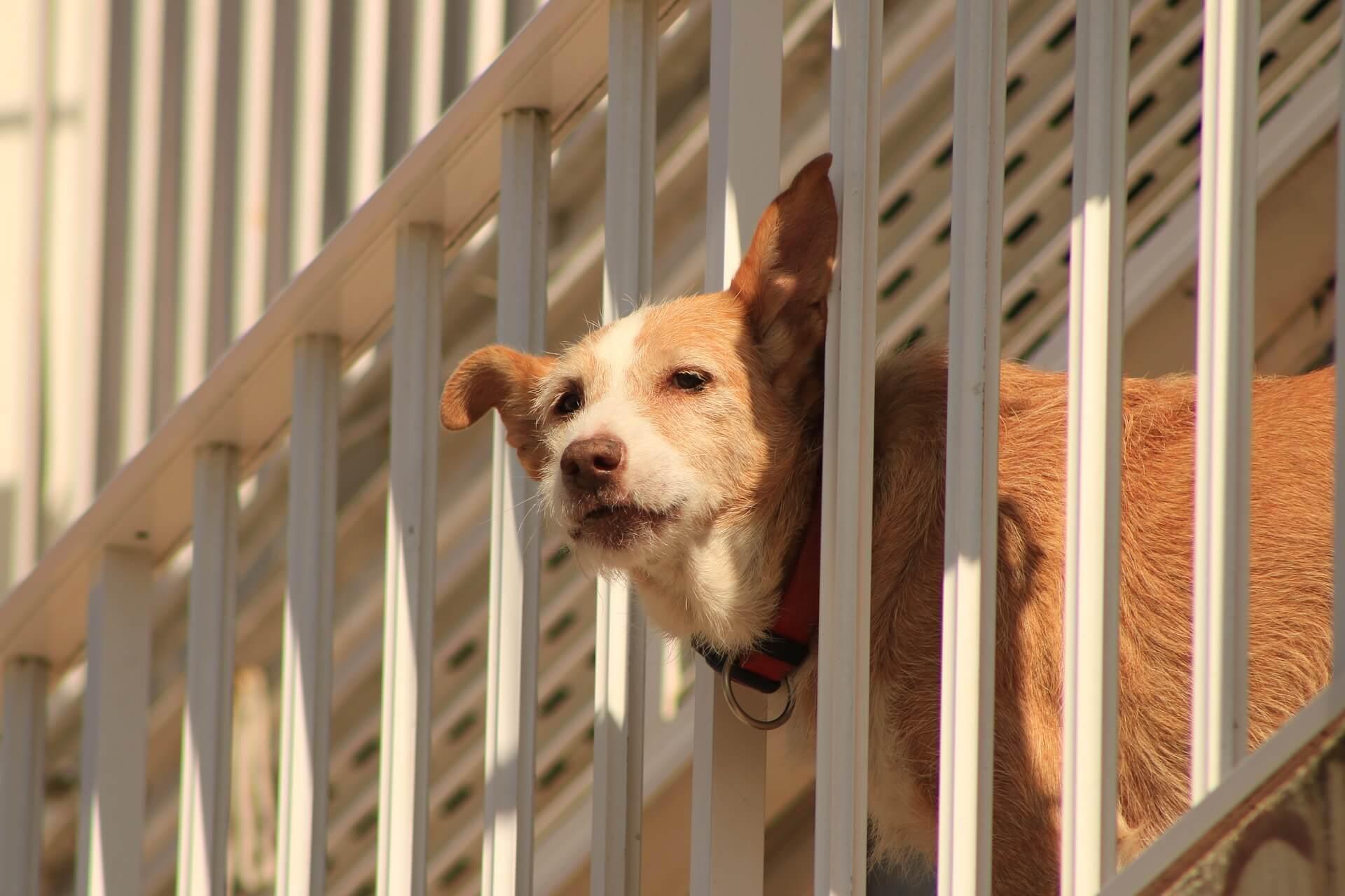 Honden Veiligheid